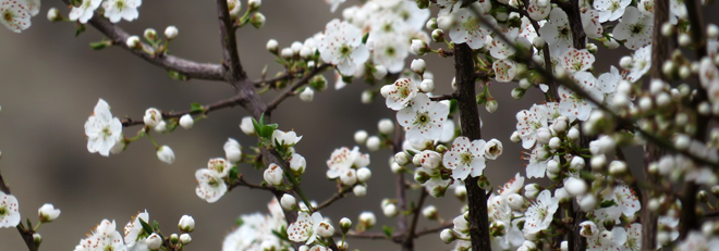 Springtime…Time for New Possibilities!
