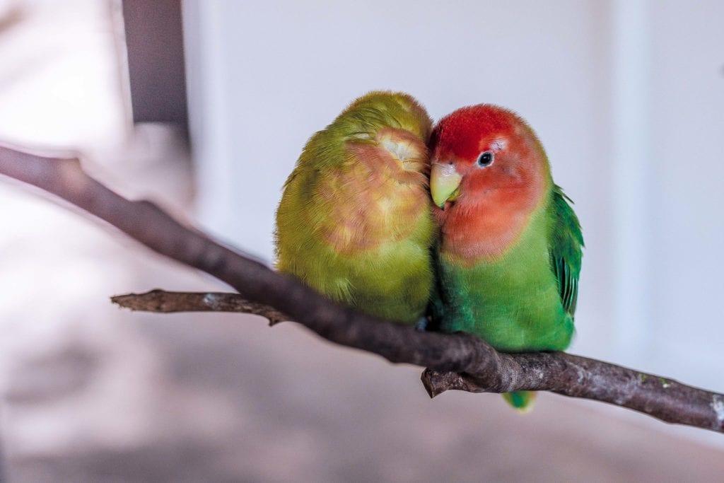 2-birds